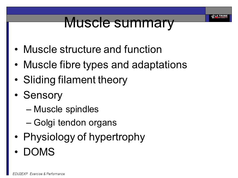 EDU2EXP Exercise & Performance Muscle summary Muscle structure and function Muscle fibre types and adaptations Sliding filament theory Sensory –Muscle spindles –Golgi tendon organs Physiology of hypertrophy DOMS
