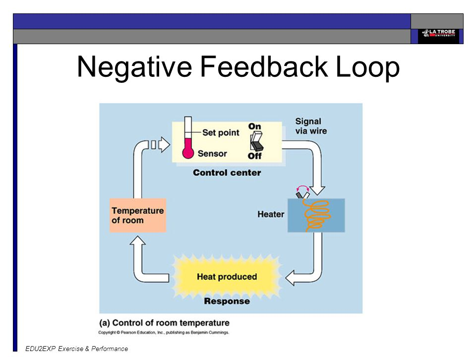 EDU2EXP Exercise & Performance Negative Feedback Loop
