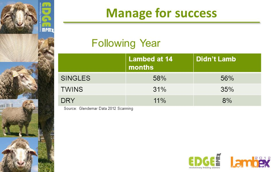Following Year Lambed at 14 months Didn't Lamb SINGLES58%56% TWINS31%35% DRY11%8% Source: Glendemar Data 2012 Scanning Manage for success