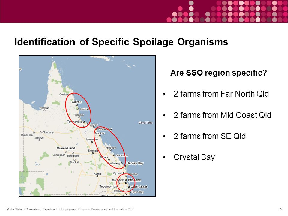 6 © The State of Queensland, Department of Employment, Economic Development and Innovation, 2010 Identification of Specific Spoilage Organisms What we have done Crystal Bays, Far North and SE Qld farms Duplicates from each farm Frozen prawns SSO have been isolated In the process of identification What's Next Mid coast farms Chilled prawns Natural antimicrobial screening