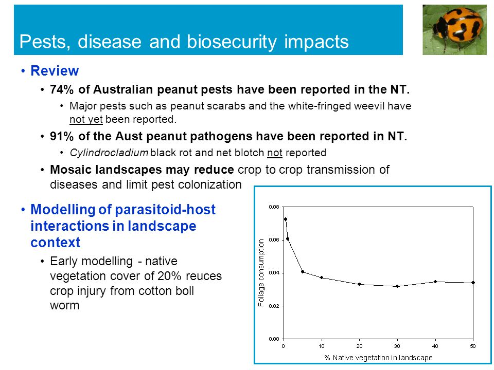 Pests, disease and biosecurity impacts Review 74% of Australian peanut pests have been reported in the NT.
