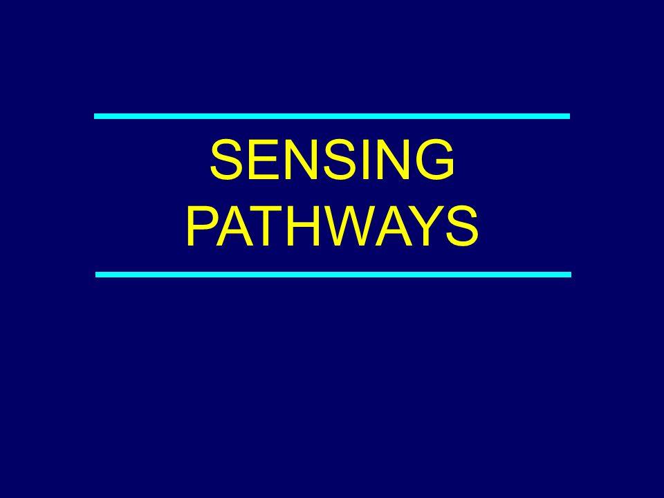 SENSING PATHWAYS 04-042