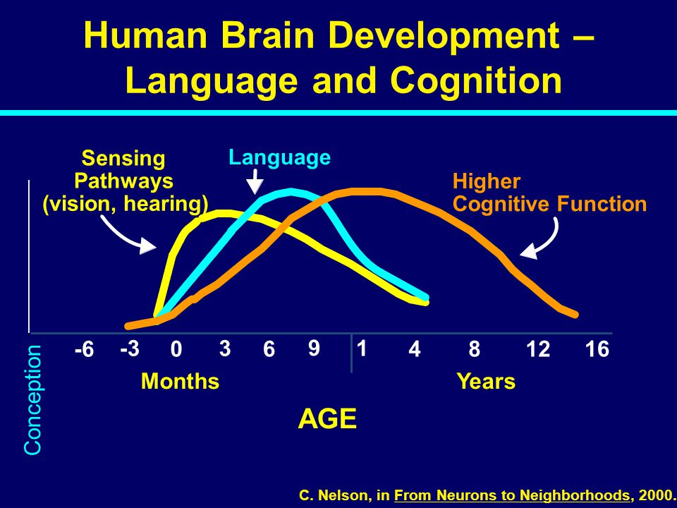 0 1 481216 AGE Human Brain Development – Language and Cognition Sensing Pathways (vision, hearing) Language Higher Cognitive Function 3 6 9 -3 -6 MonthsYears C.