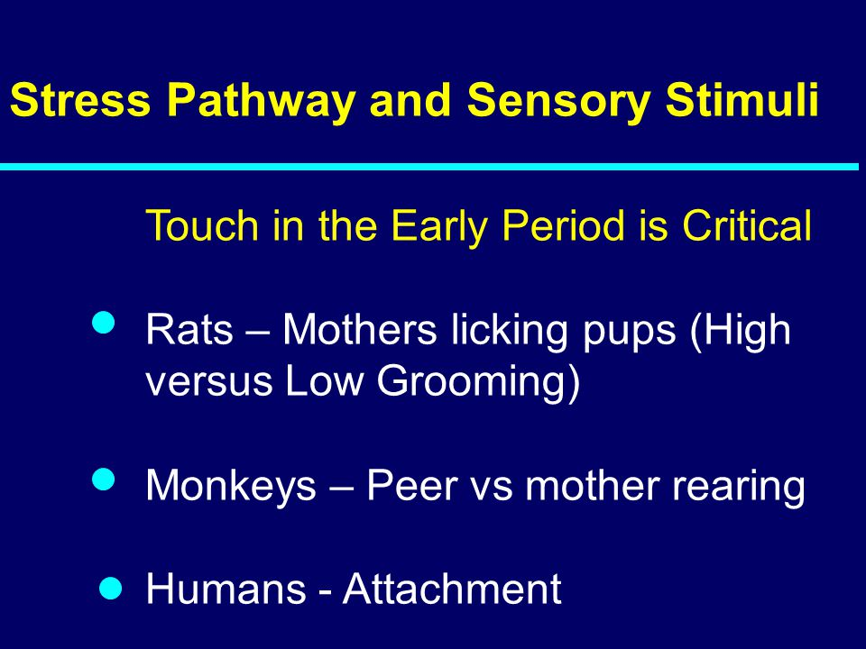 Stress Pathway and Sensory Stimuli Touch in the Early Period is Critical Rats – Mothers licking pups (High versus Low Grooming) Monkeys – Peer vs mother rearing Humans - Attachment 05-213