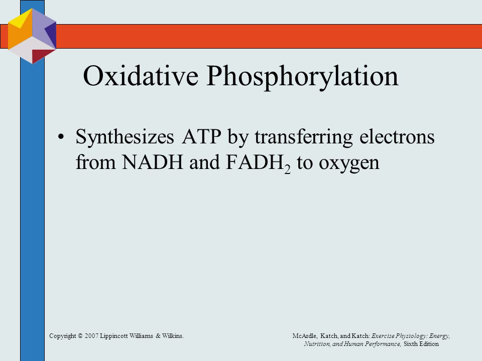 Copyright © 2007 Lippincott Williams & Wilkins.McArdle, Katch, and Katch: Exercise Physiology: Energy, Nutrition, and Human Performance, Sixth Edition Oxidative Phosphorylation Synthesizes ATP by transferring electrons from NADH and FADH 2 to oxygen