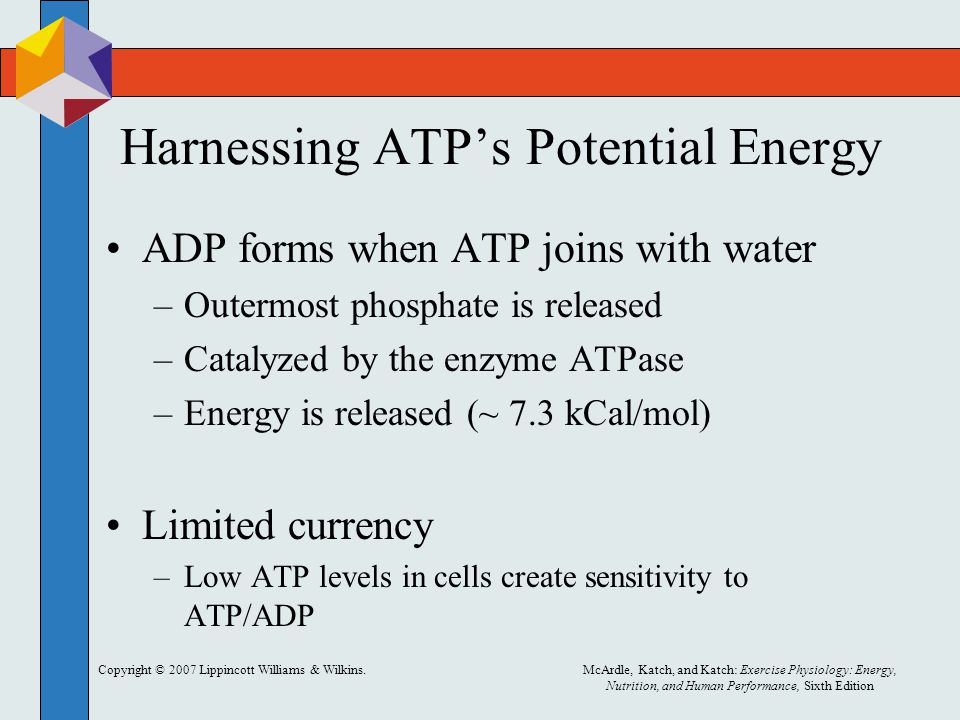 Copyright © 2007 Lippincott Williams & Wilkins.McArdle, Katch, and Katch: Exercise Physiology: Energy, Nutrition, and Human Performance, Sixth Edition Harnessing ATP's Potential Energy ADP forms when ATP joins with water –Outermost phosphate is released –Catalyzed by the enzyme ATPase –Energy is released (~ 7.3 kCal/mol) Limited currency –Low ATP levels in cells create sensitivity to ATP/ADP