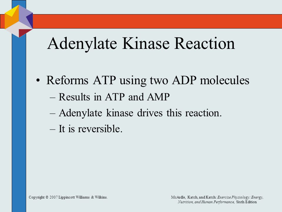 Copyright © 2007 Lippincott Williams & Wilkins.McArdle, Katch, and Katch: Exercise Physiology: Energy, Nutrition, and Human Performance, Sixth Edition Adenylate Kinase Reaction Reforms ATP using two ADP molecules –Results in ATP and AMP –Adenylate kinase drives this reaction.