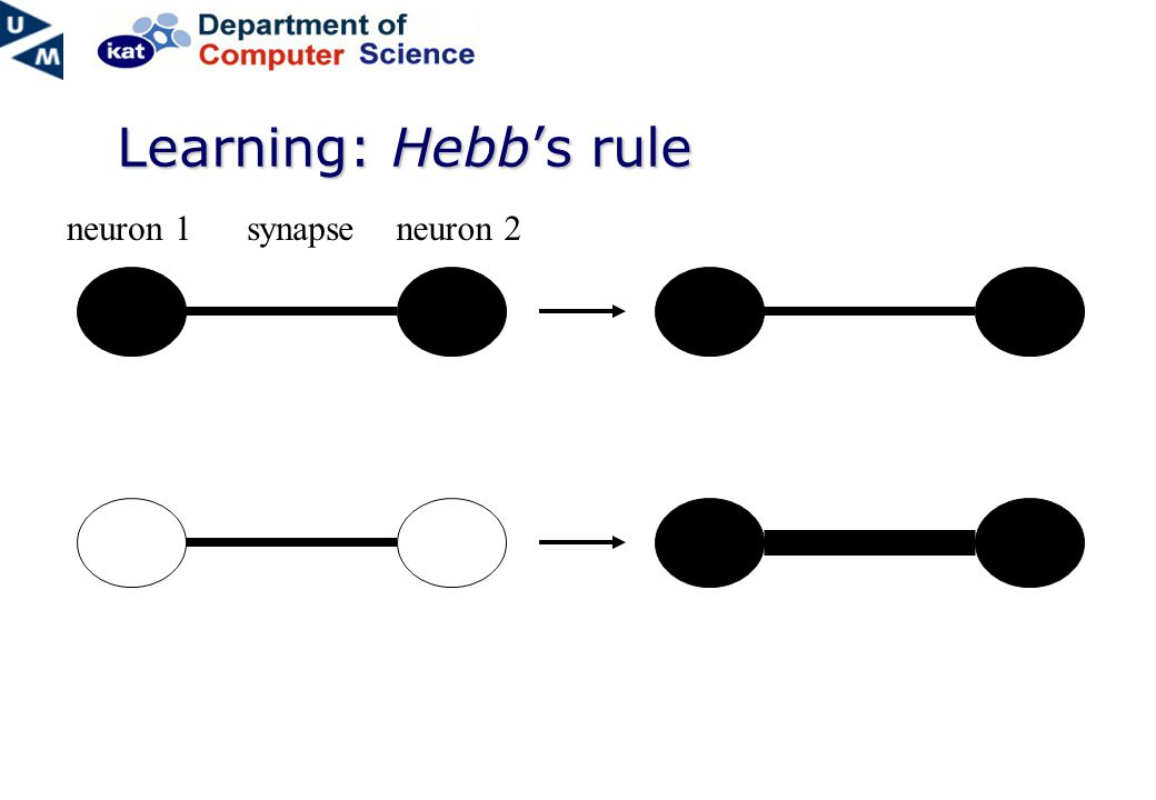 Learning: Hebb's rule neuron 1synapseneuron 2