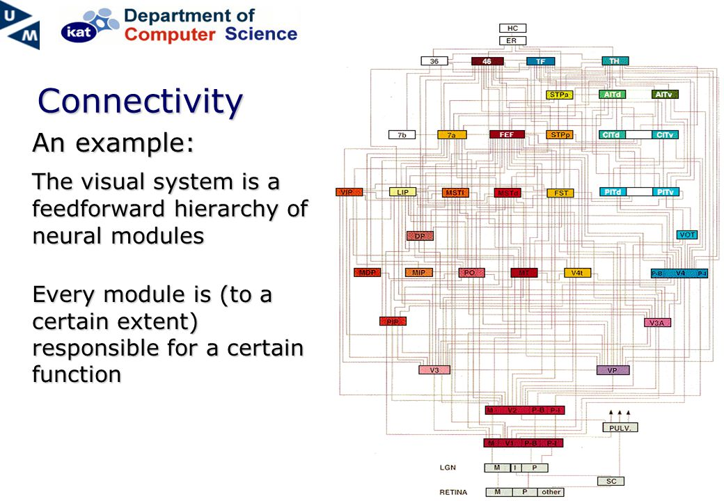 Connectivity An example: The visual system is a feedforward hierarchy of neural modules Every module is (to a certain extent) responsible for a certain function