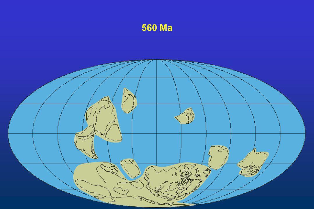 560 Ma