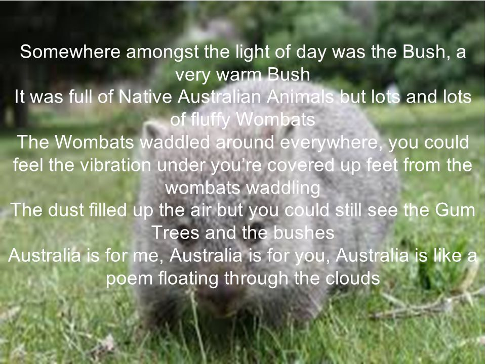 Somewhere amongst the light of day was the Bush, a very warm Bush It was full of Native Australian Animals but lots and lots of fluffy Wombats The Wom