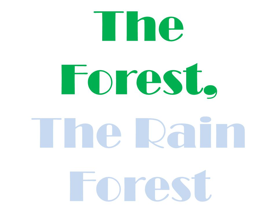 The Forest, The Rain Forest