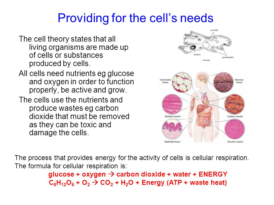 Providing for the cell's needs The cell theory states that all living organisms are made up of cells or substances produced by cells. All cells need n