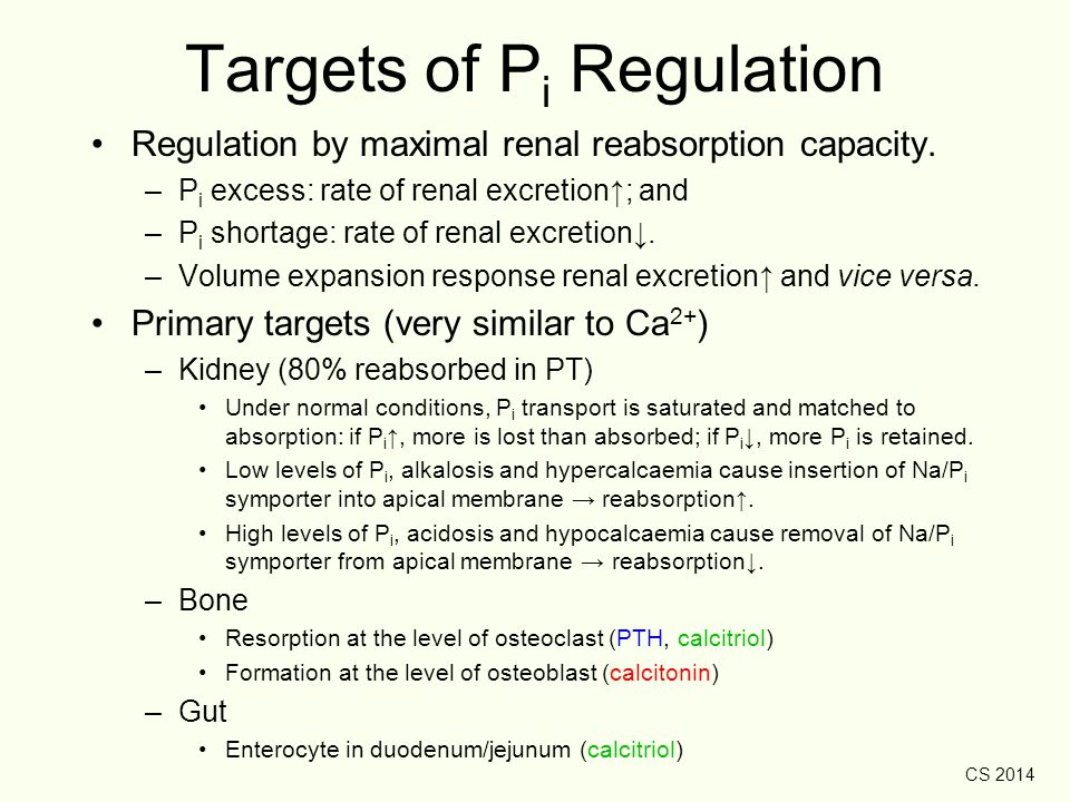CS 2014 Targets of P i Regulation Regulation by maximal renal reabsorption capacity. –P i excess: rate of renal excretion↑; and –P i shortage: rate of