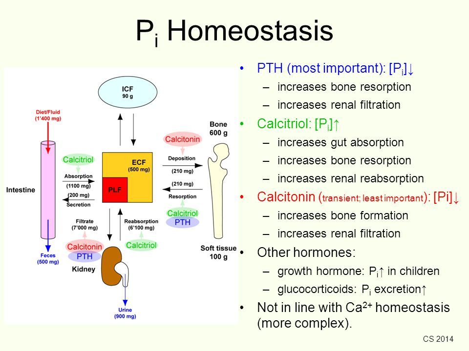 CS 2014 P i Homeostasis PTH (most important): [P i ]↓ –increases bone resorption –increases renal filtration Calcitriol: [P i ]↑ –increases gut absorp