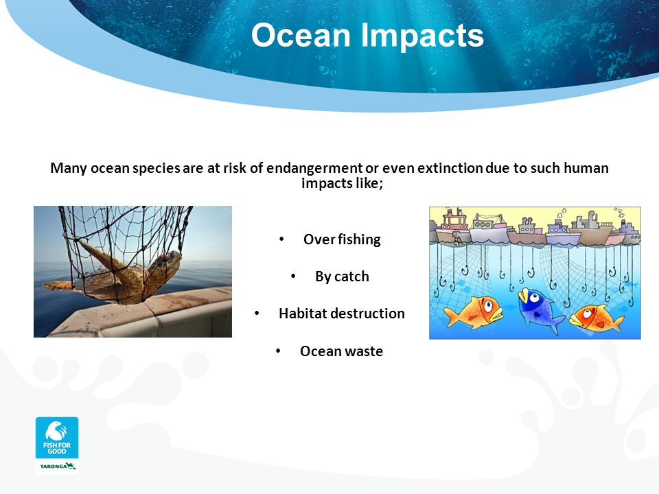 Ocean Impacts Many ocean species are at risk of endangerment or even extinction due to such human impacts like; Over fishing By catch Habitat destruct
