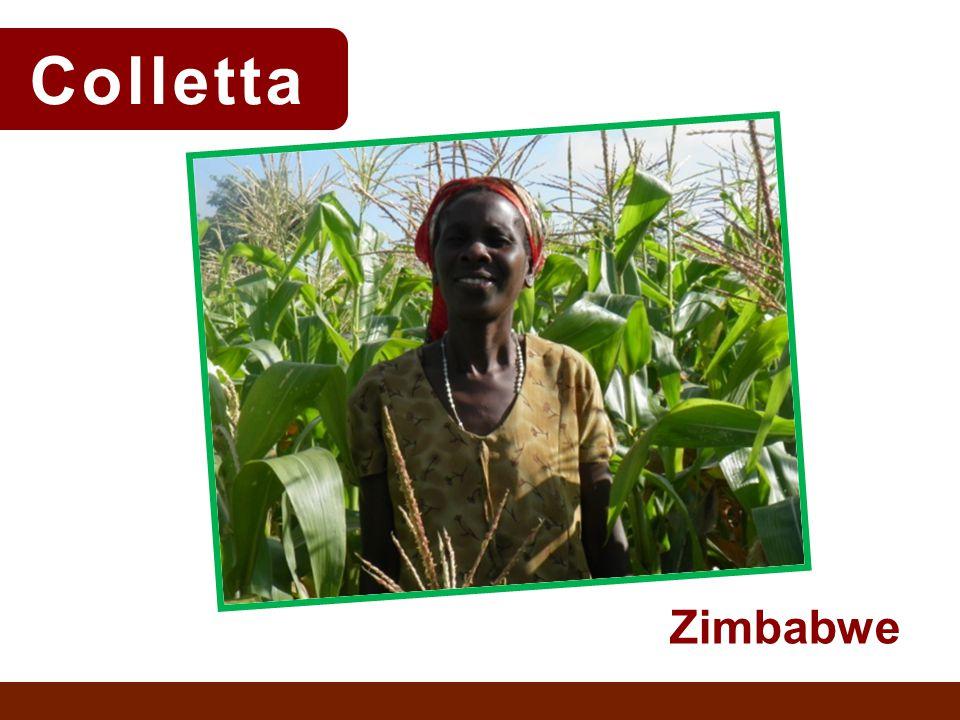Colletta Zimbabwe