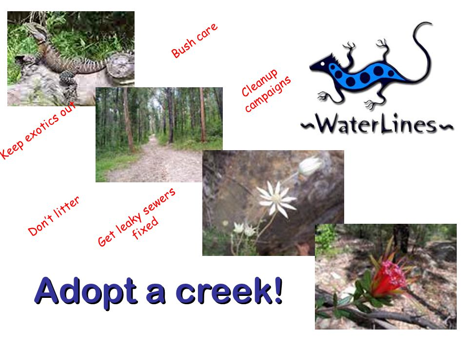 Adopt a creek! Bush care Cleanup campaigns Keep exotics out Get leaky sewers fixed Don't litter