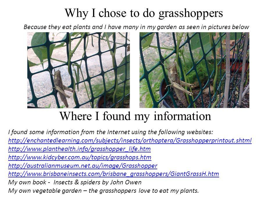 What a grasshopper looks like