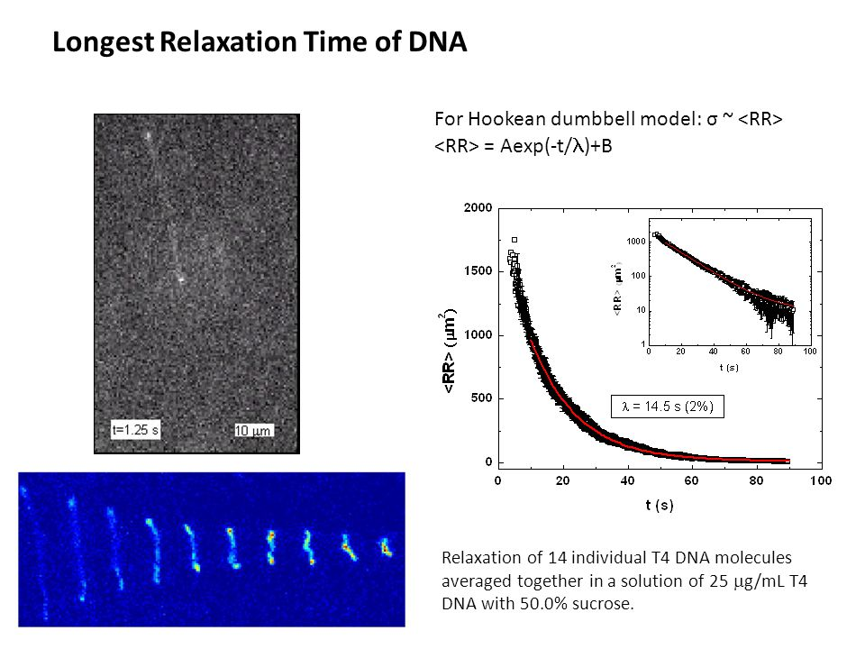 Longest Relaxation Time of DNA For Hookean dumbbell model: σ ~ = Aexp(-t/ )+B Relaxation of 14 individual T4 DNA molecules averaged together in a solution of 25  g/mL T4 DNA with 50.0% sucrose.