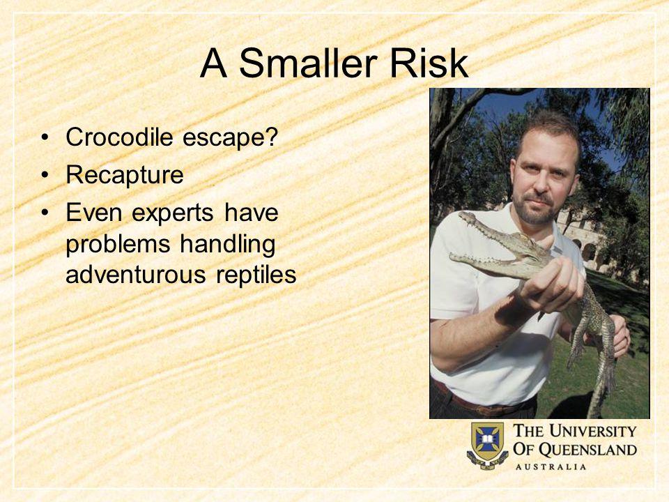 A Smaller Risk Crocodile escape? Recapture Even experts have problems handling adventurous reptiles