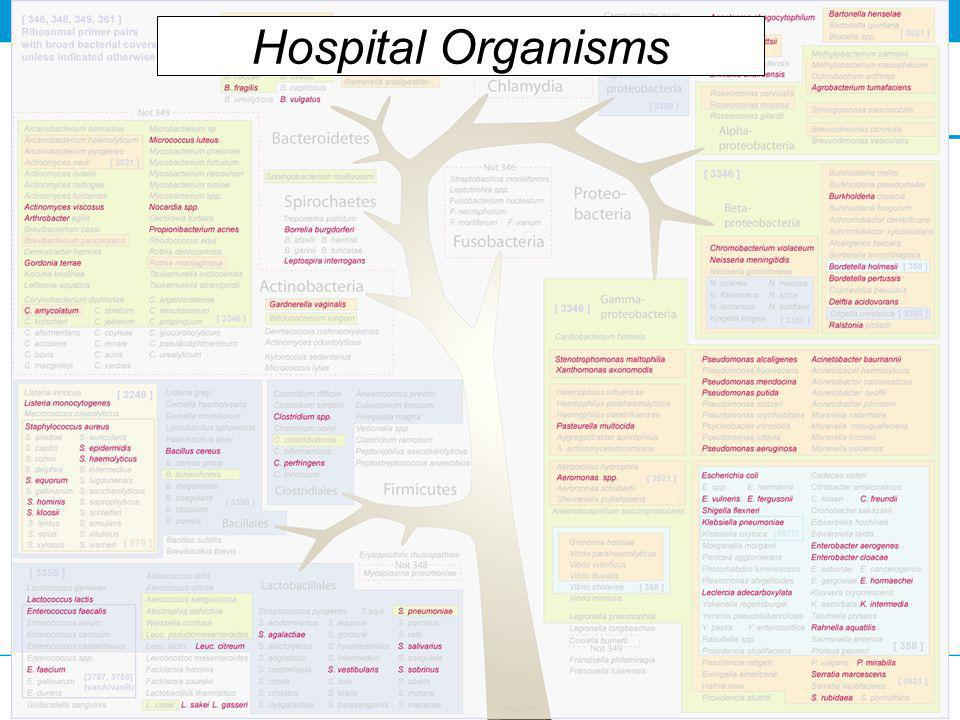 Hospital Organisms