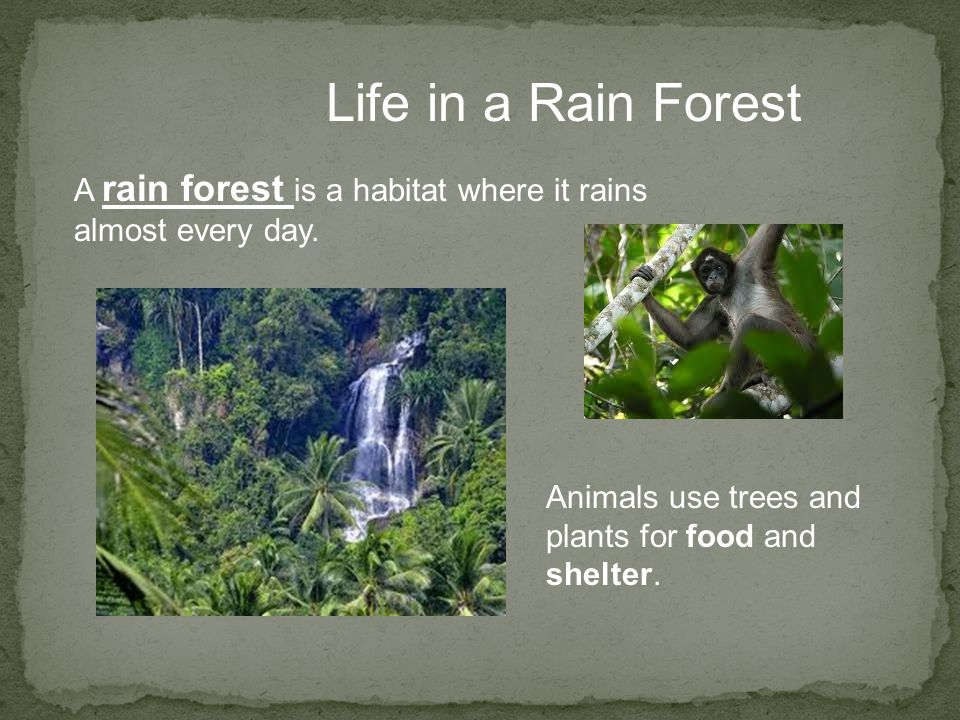 Life in a Rain Forest A rain forest is a habitat where it rains almost every day. Animals use trees and plants for food and shelter.