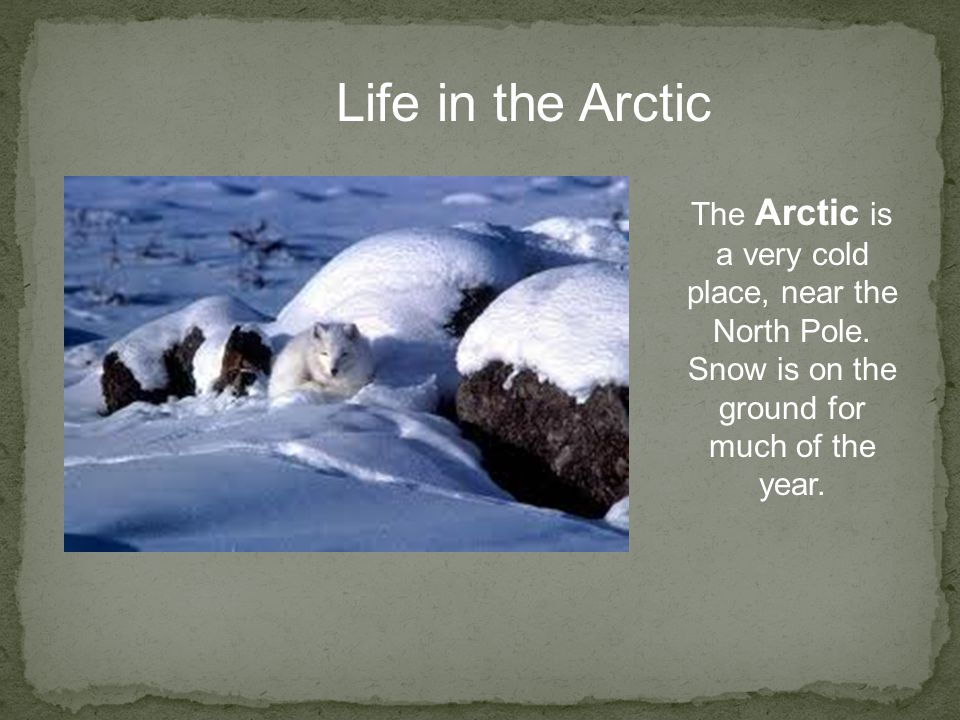 Life in the Arctic The Arctic is a very cold place, near the North Pole. Snow is on the ground for much of the year.
