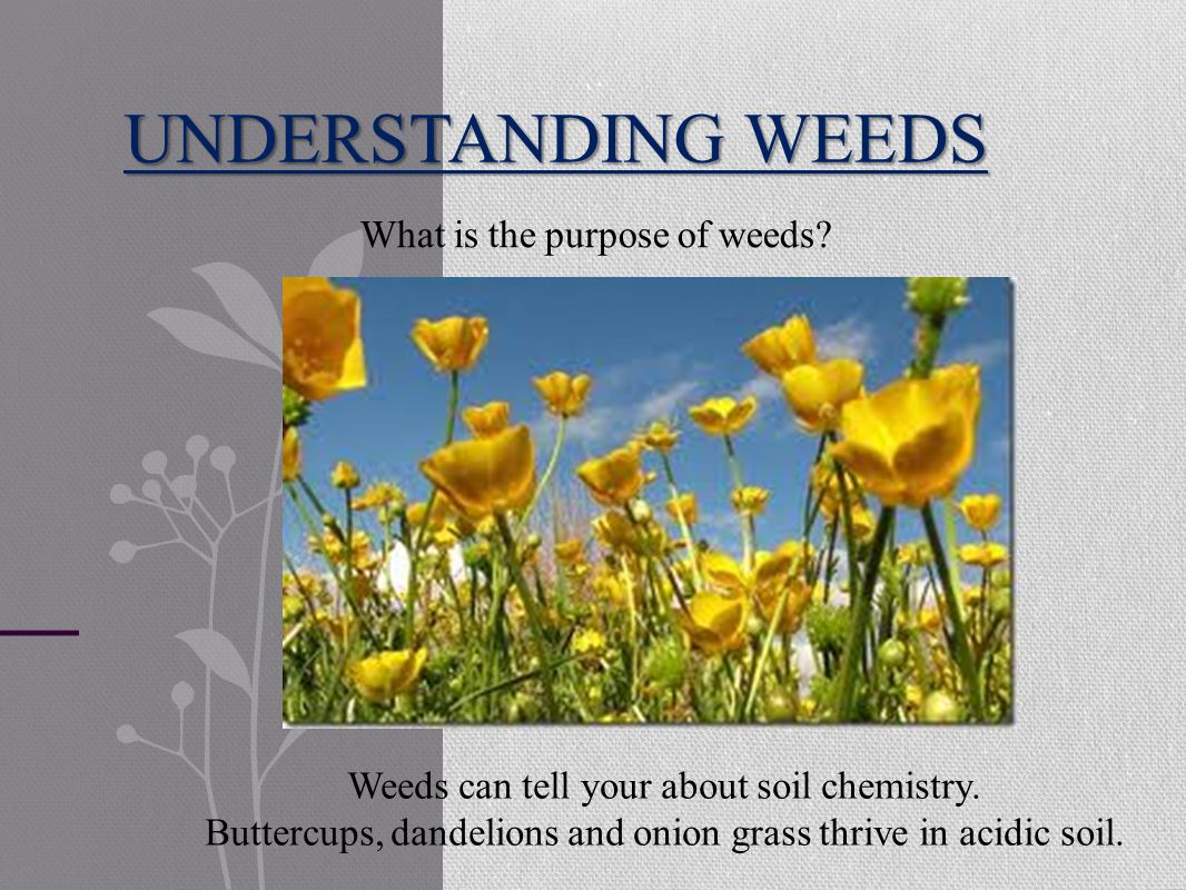 UNDERSTANDING WEEDS Weeds can tell your about soil chemistry.