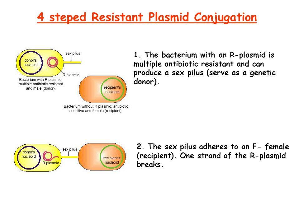 4 steped Resistant Plasmid Conjugation 1.