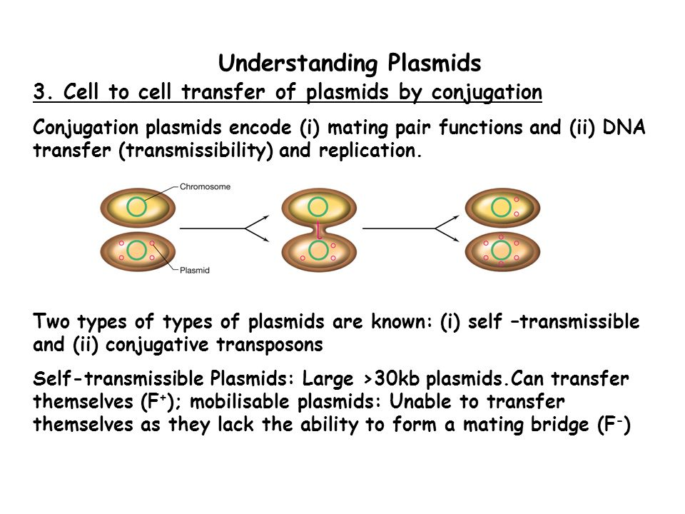Understanding Plasmids 3.