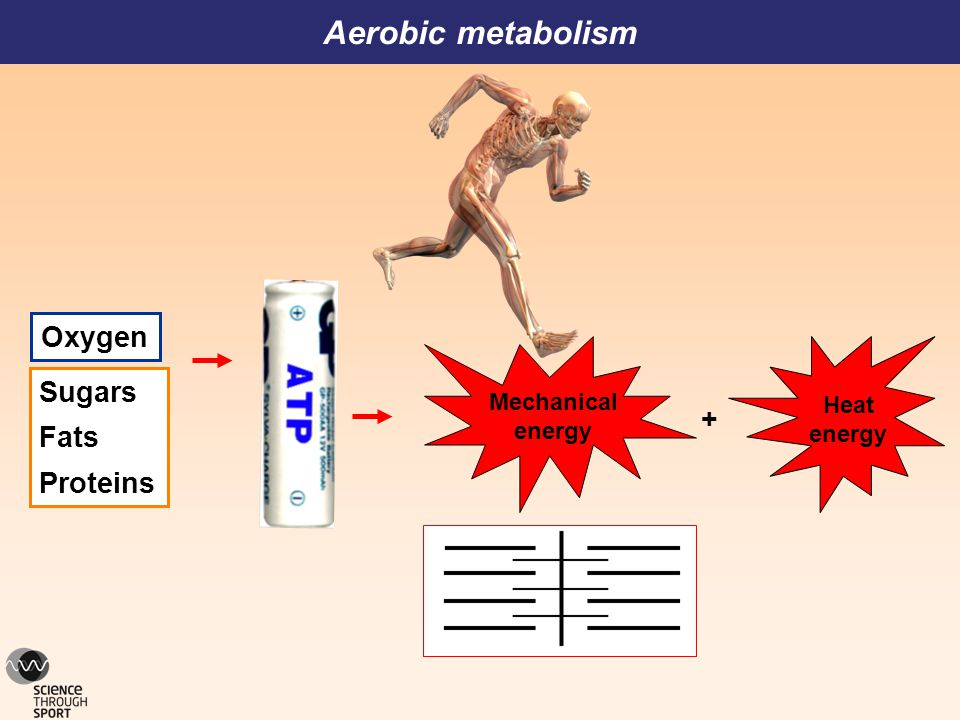 Oxygen Sugars Fats Proteins Aerobic metabolism Mechanical energy Heat energy +