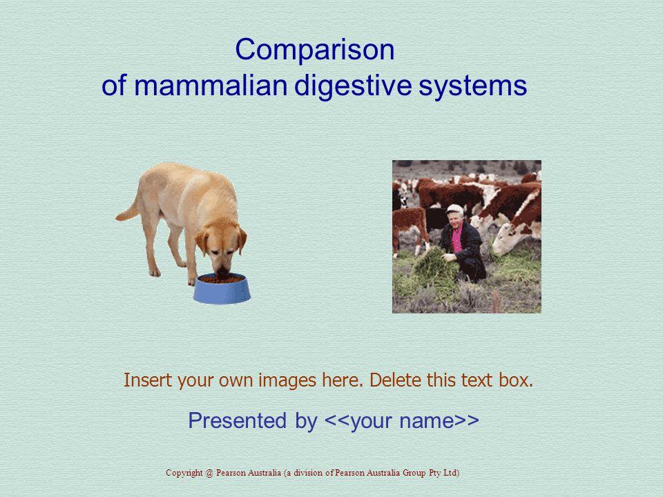 Heinemann Biology Activity Manual Activity 2.8—Mammalian digestive systems Copyright @ Pearson Australia (a division of Pearson Australia Group Pty Ltd) Dog Diet...