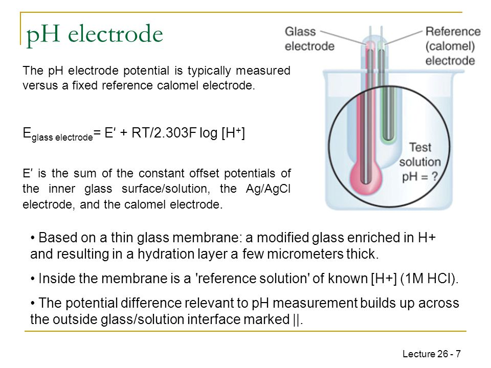 Lecture 26 - 7 pH electrode The pH electrode potential is typically measured versus a fixed reference calomel electrode.