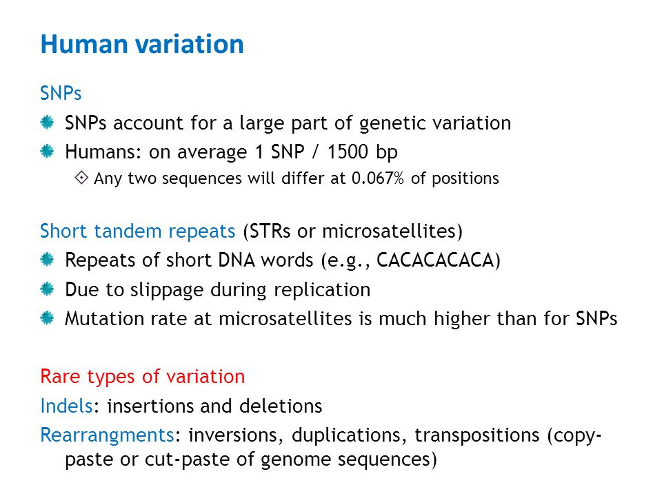 Human variation SNPs SNPs account for a large part of genetic variation Humans: on average 1 SNP / 1500 bp  Any two sequences will differ at 0.067% o