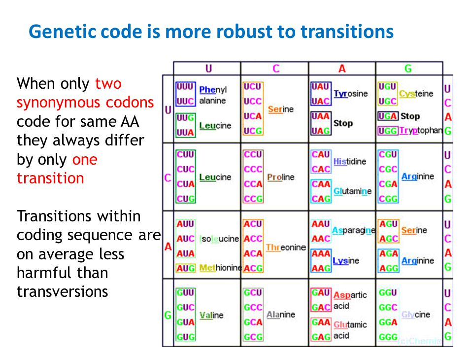 Genetic code is more robust to transitions When only two synonymous codons code for same AA they always differ by only one transition Transitions with