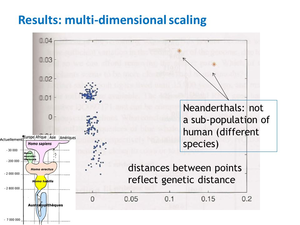 Results: multi-dimensional scaling Neanderthals: not a sub-population of human (different species) distances between points reflect genetic distance