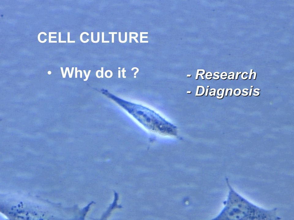 The cell culture environment