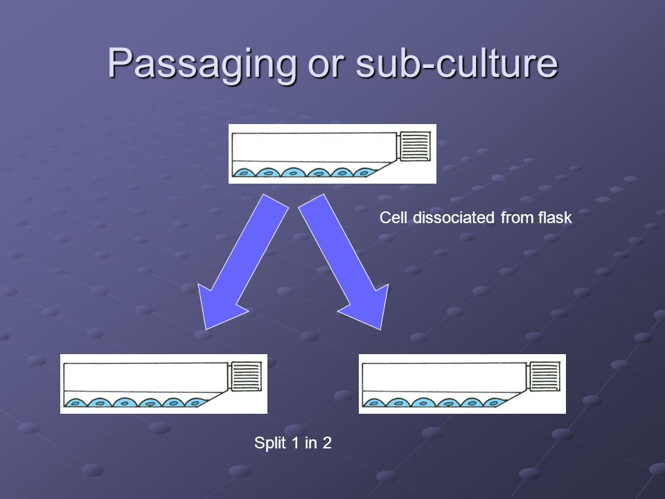 Passaging or sub-culture Cell dissociated from flask Split 1 in 2