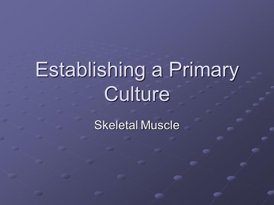 Establishing a Primary Culture Skeletal Muscle