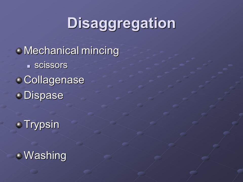 Disaggregation Mechanical mincing scissors scissorsCollagenaseDispaseTrypsinWashing