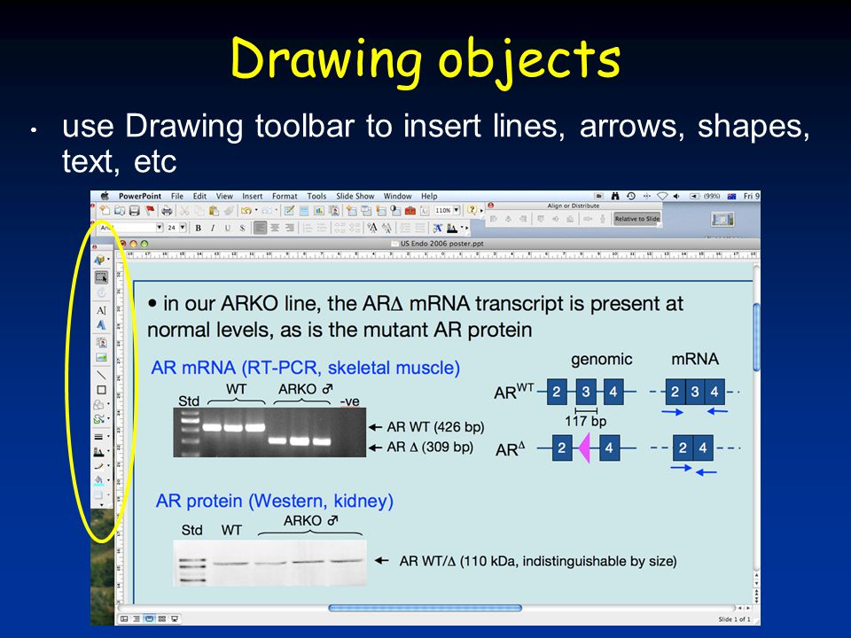 Drawing objects use Drawing toolbar to insert lines, arrows, shapes, text, etc