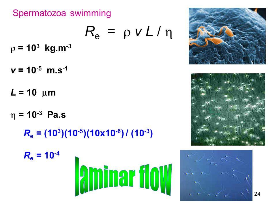24 R e =  v L /  Spermatozoa swimming  = 10 3 kg.m -3 v = 10 -5 m.s -1 L = 10  m  = 10 -3 Pa.s R e = (10 3 )(10 -5 )(10x10 -6 ) / (10 -3 ) R e =