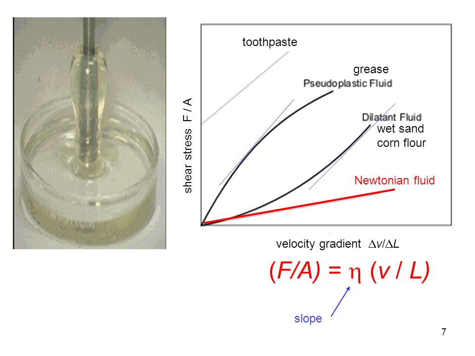 7 toothpaste velocity gradient  v/  L grease wet sand corn flour (F/A) =  (v / L) Newtonian fluid shear stress F / A slope