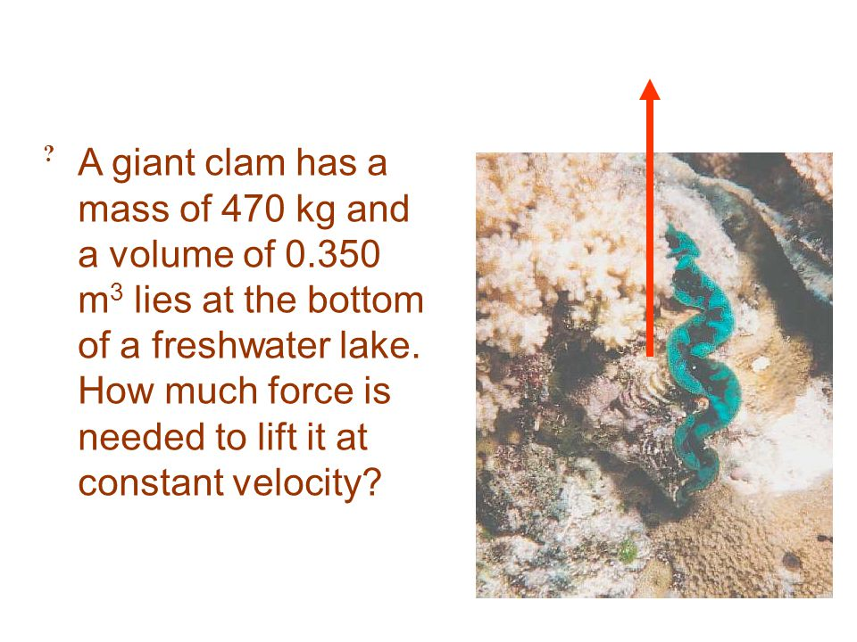 ? A giant clam has a mass of 470 kg and a volume of 0.350 m 3 lies at the bottom of a freshwater lake. How much force is needed to lift it at constant