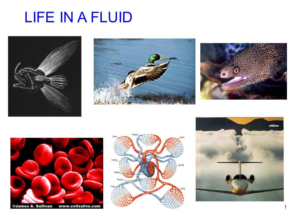1 LIFE IN A FLUID