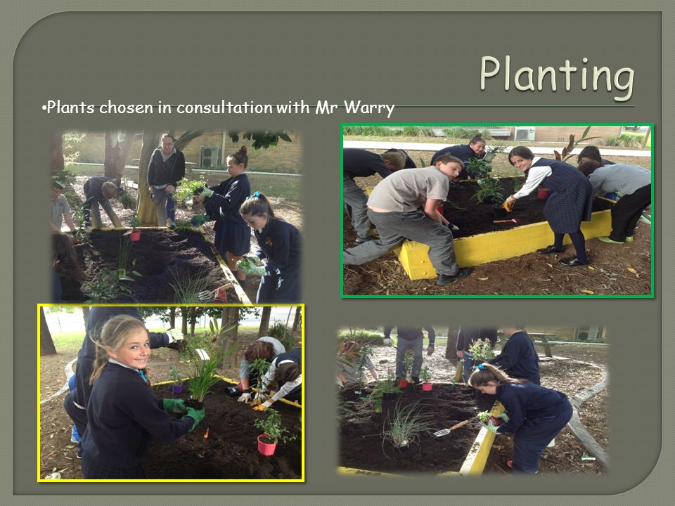 Plants chosen in consultation with Mr Warry