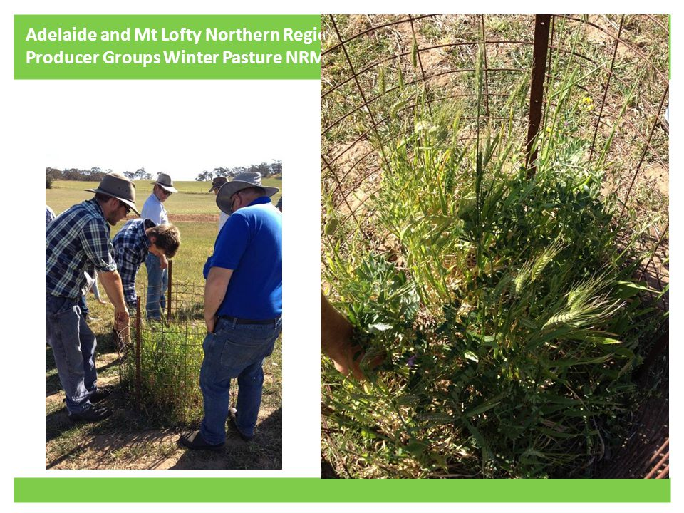 Adelaide and Mt Lofty Northern Region Producer Groups Winter Pasture NRM Project