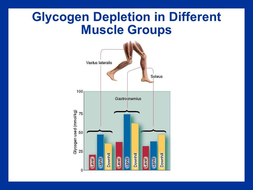 Glycogen Depletion in Different Muscle Groups