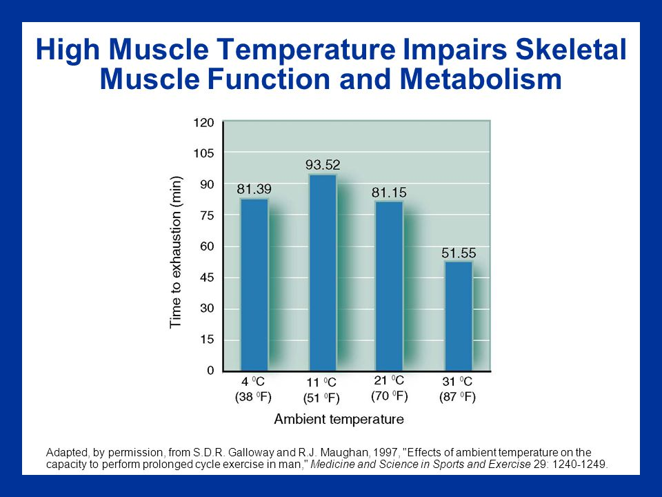 High Muscle Temperature Impairs Skeletal Muscle Function and Metabolism Adapted, by permission, from S.D.R. Galloway and R.J. Maughan, 1997,